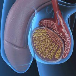 prosztatagyulladás és elhúzódó erekció