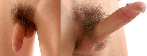 Pénisz 12 cm-es merevedési állapotban, Egészség a pénisz számára